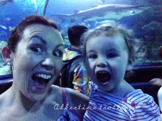 aquarium 7