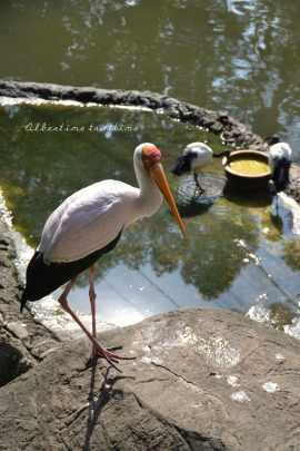 bird park 10