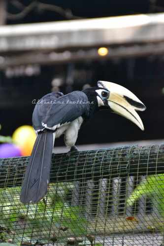bird park 16