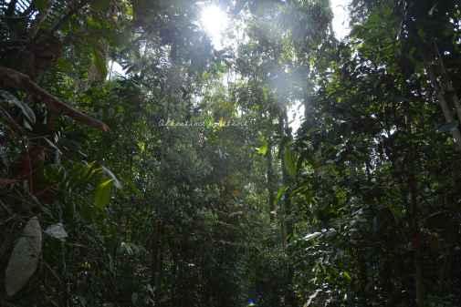 orangutans19