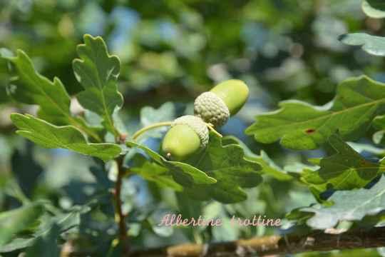 terra botanica 15