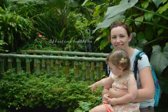 butterfly park 10