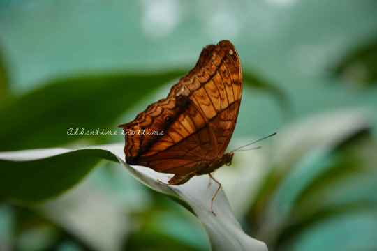 butterfly park 2