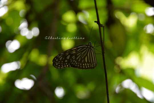 butterfly park 3