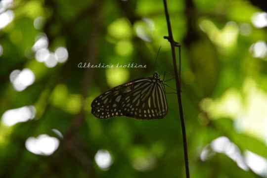 butterfly park 3