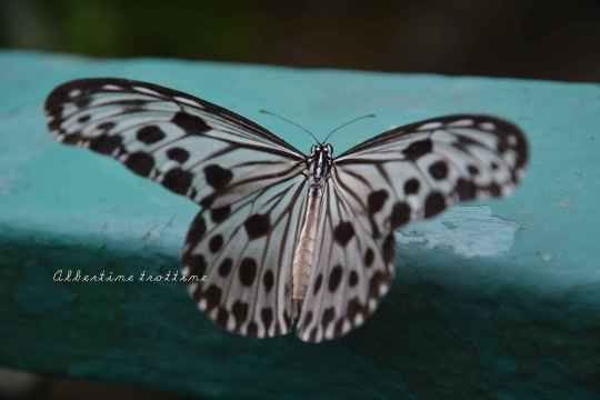 butterfly park 4