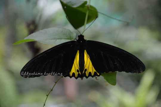 butterfly park 5