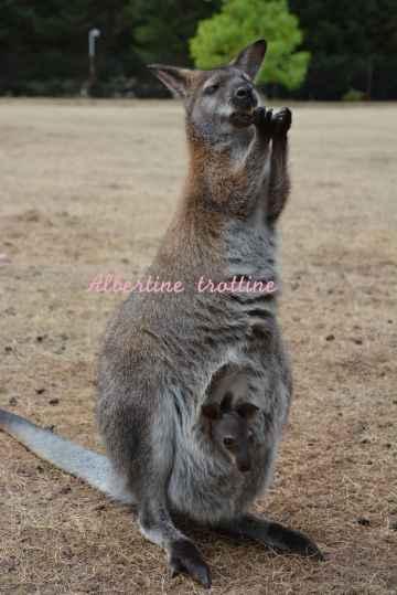 jardin kangourou 10