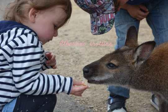 jardin kangourou 4