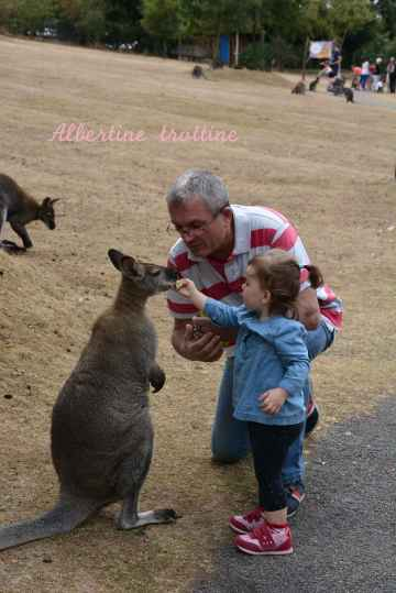 jardin kangourou 5