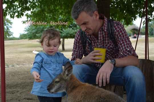 jardin kangourou 6
