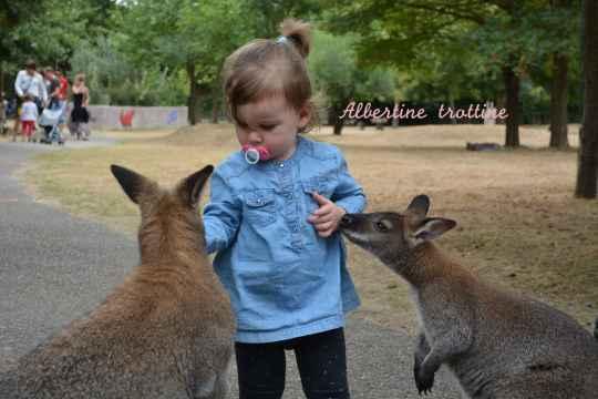 jardin kangourou 9