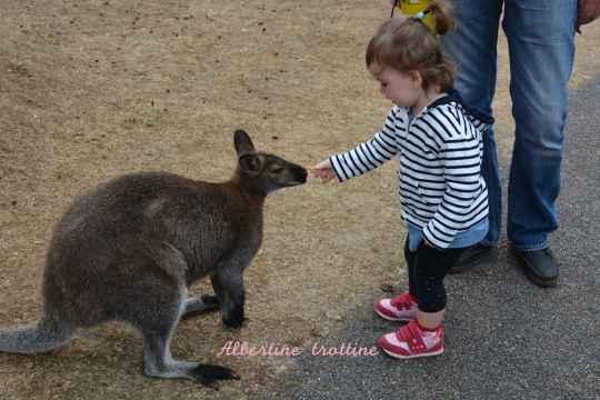jardin kangourou