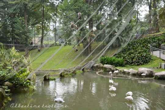 bird park alec 10