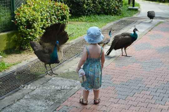 bird park alec 2