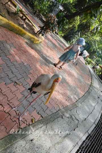 bird park alec 3