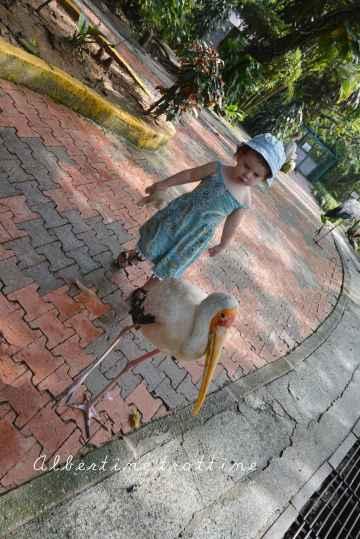 bird park alec 4