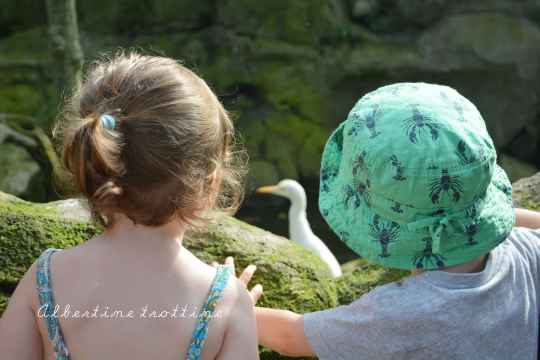 bird park alec