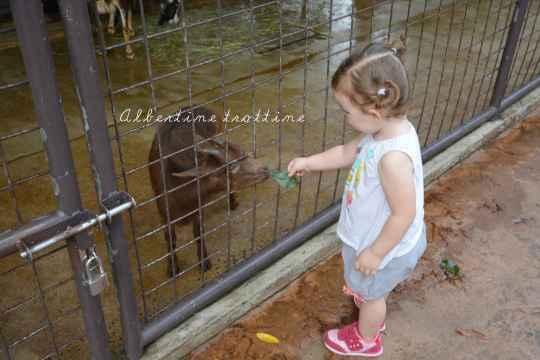 singapour zoo 6