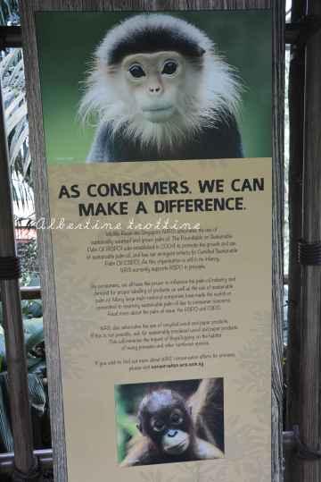 zoo singapour 10