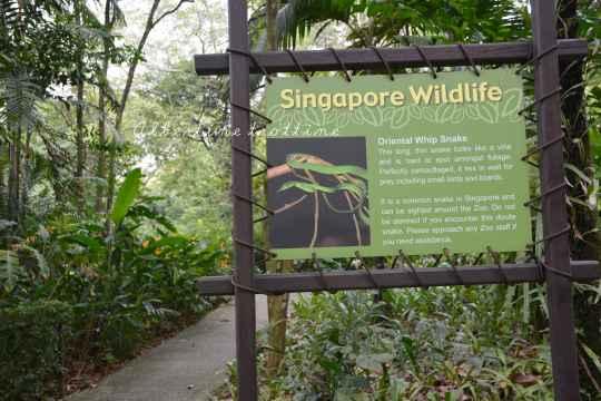 zoo singapour 11