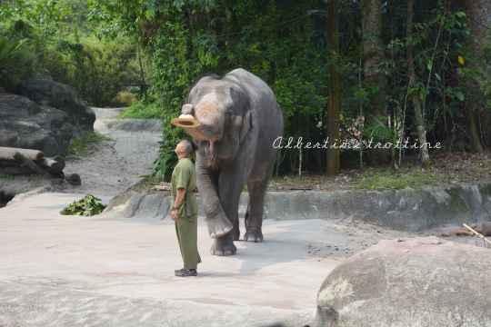 zoo singapour 12