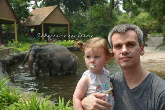 zoo singapour 13