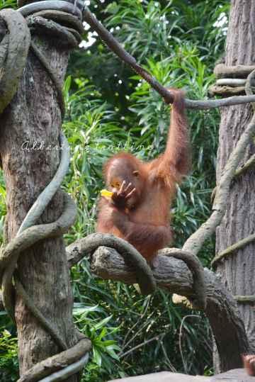 zoo singapour 2