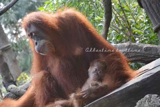 zoo singapour 4