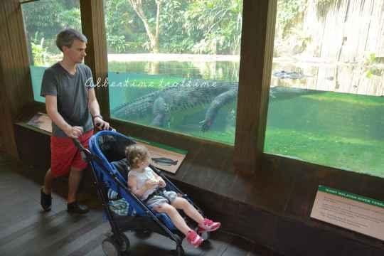 zoo singapour 9