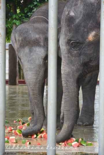elephant sanctuary 2