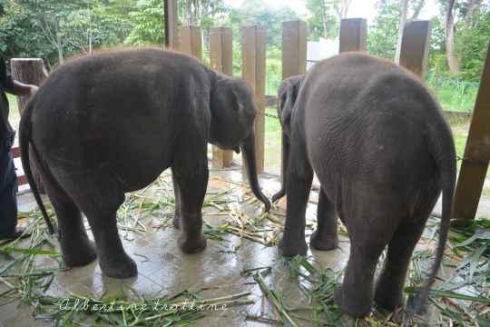 elephant sanctuary 4