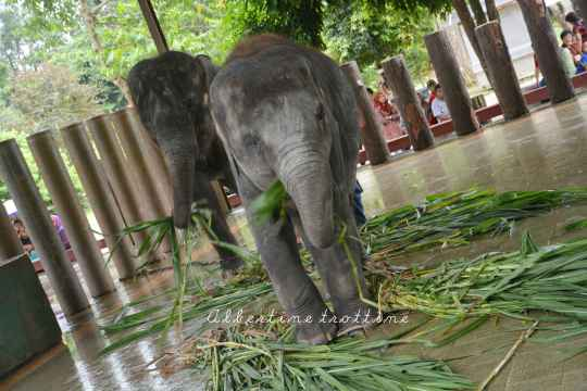 elephant sanctuary 5