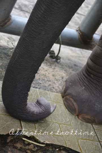 elephant sanctuary 6