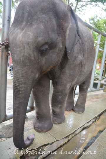 elephant sanctuary 7