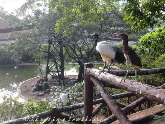 bird park avec papi 4
